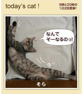Tvtodays_cat